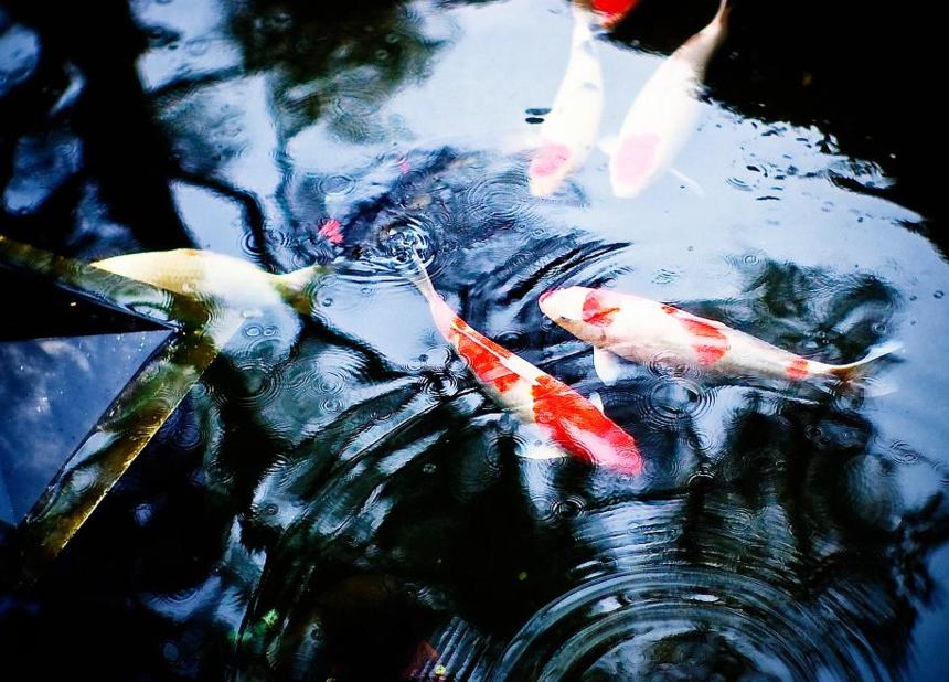 杭州锦鲤鱼池设计