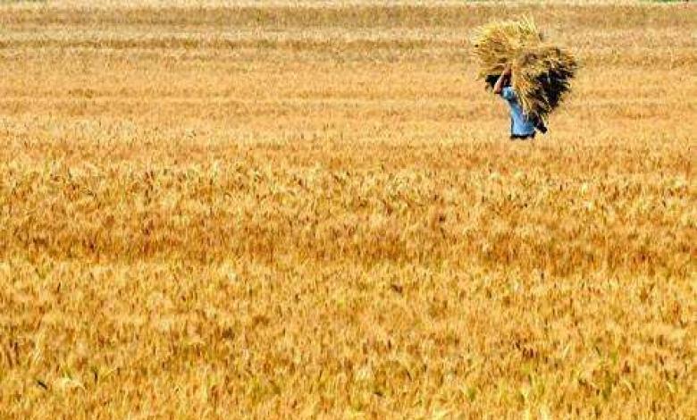 全国粮食加工转化率今年将达88%