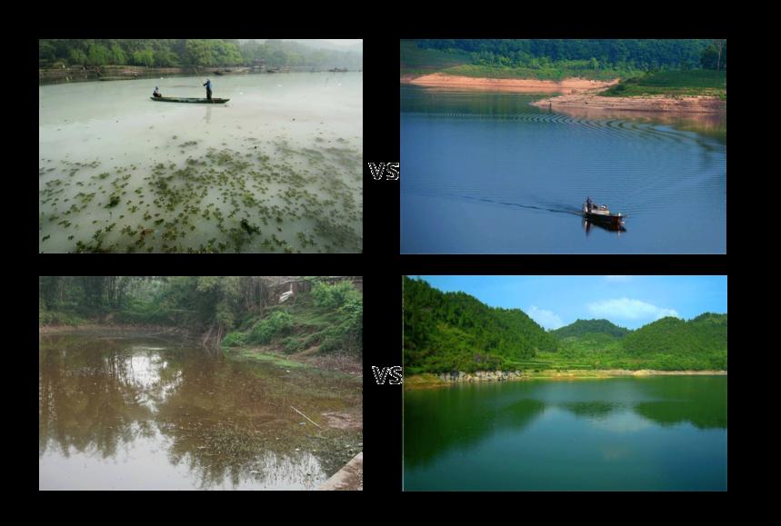 水体净化图.png