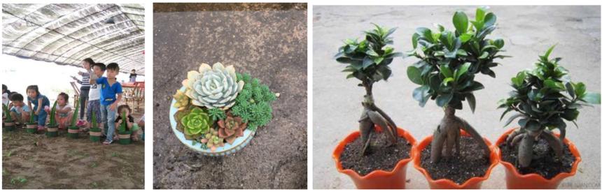 盆栽制作(一年四季都可)