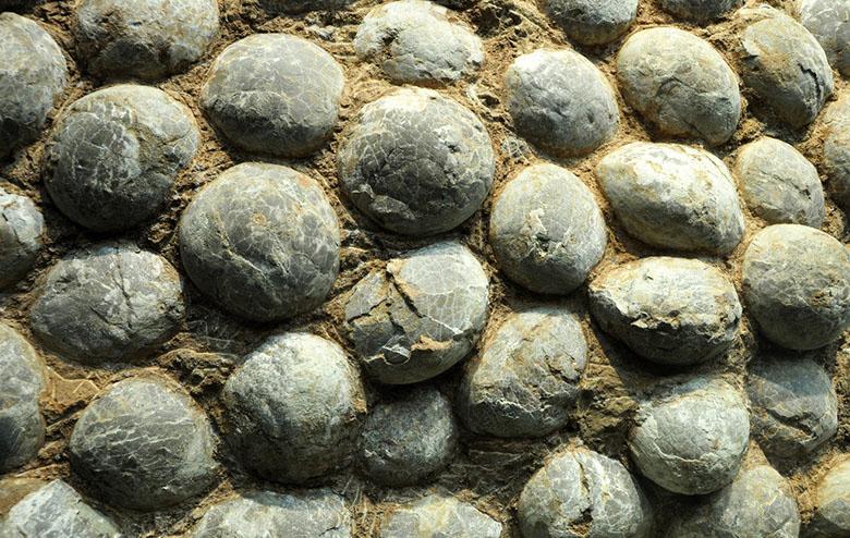 恐龙蛋化石.jpg