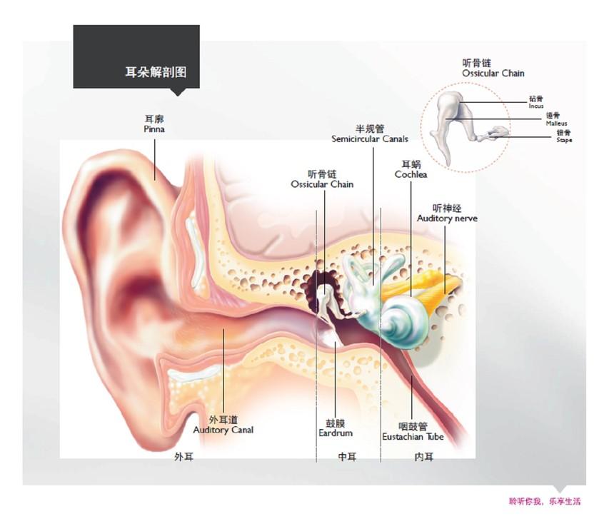 奥迪康耳部解剖图.jpg