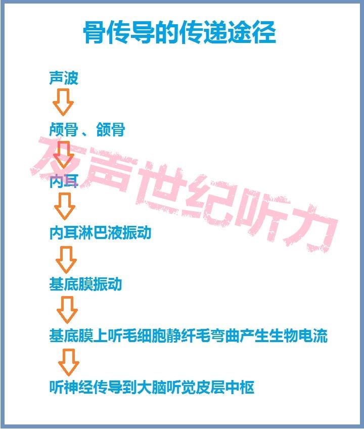 骨传导传递途径_副本.jpg