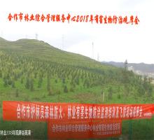 无人机防治林业病虫害