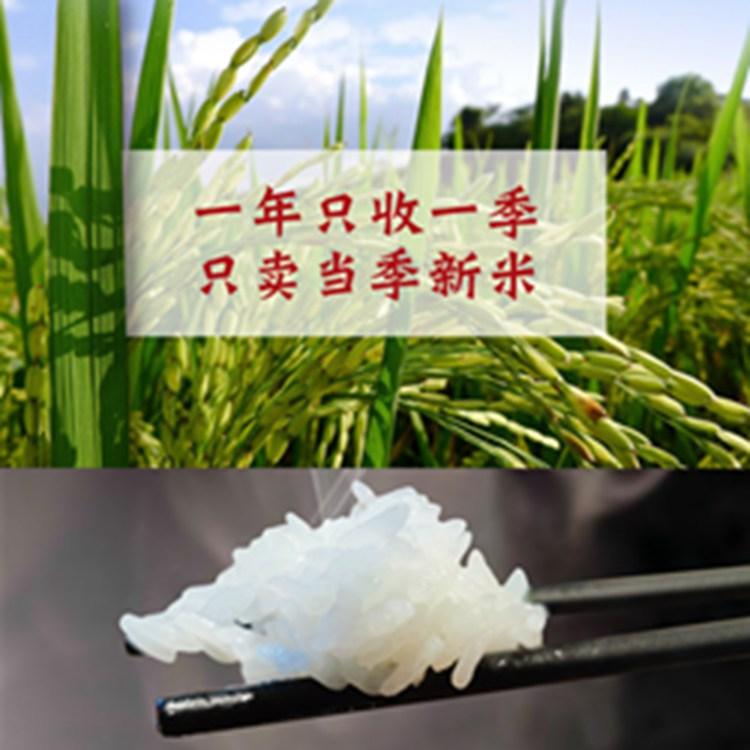 北大荒鸭稻有机长粒香