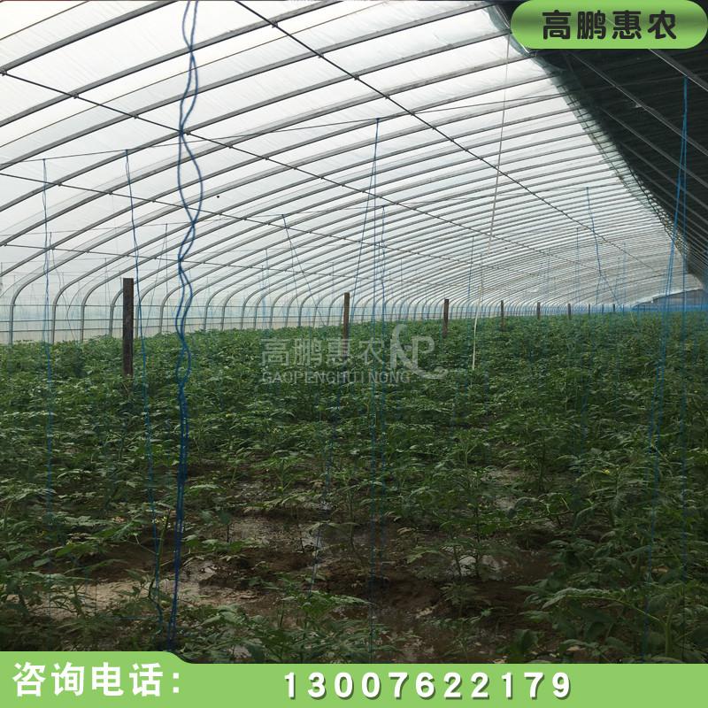漳州日光温室大棚建设案例展示