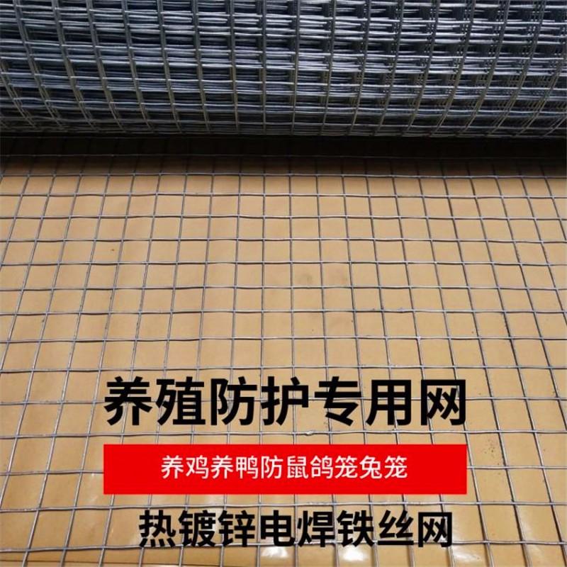 热镀锌电焊铁丝网养鸡鸭鹅兔鸽子养殖防护网.jpg
