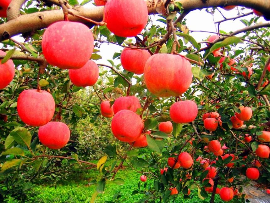 果树.jpg
