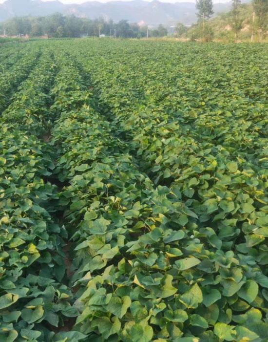 錦隆農業5-700.jpg
