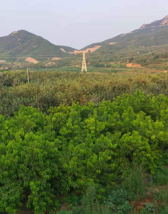 錦隆農業3-700.jpg