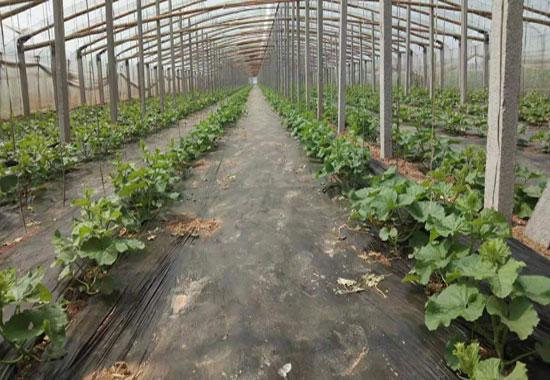 慕青家庭農場5-380.jpg