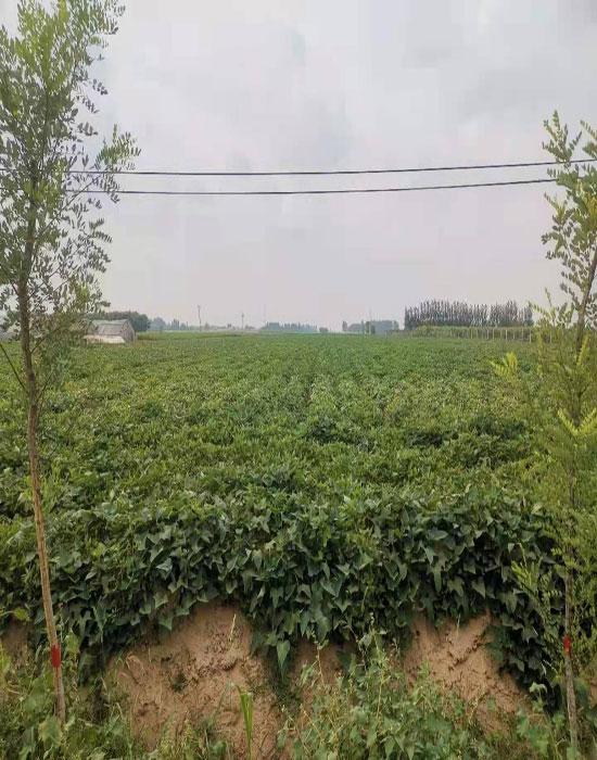 關福家庭農場5-700.jpg