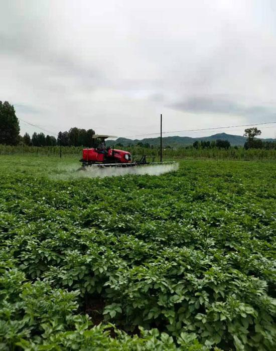 薯農樂農場3-700.jpg