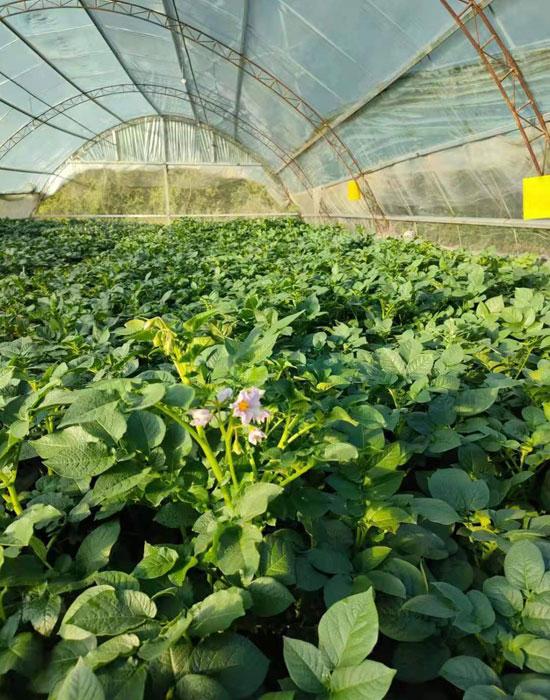 薯農樂農場8-700.jpg