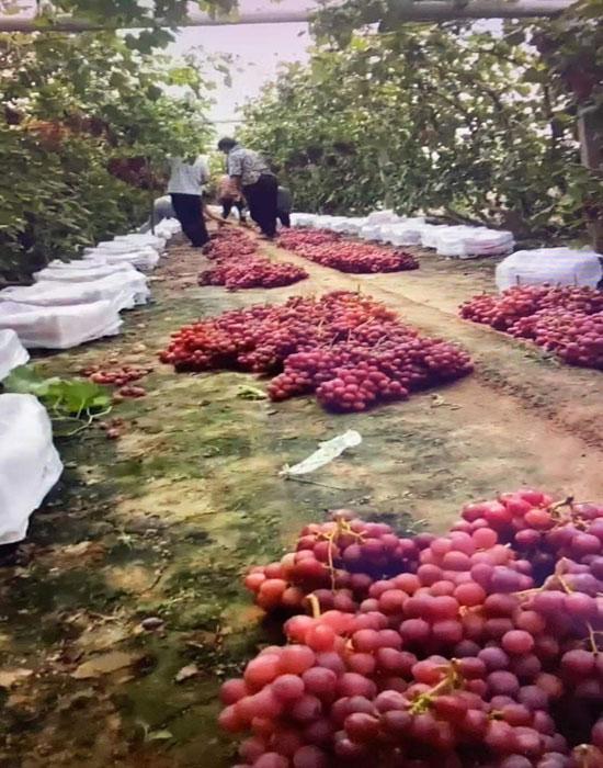 張悅家庭農場7-700.jpg