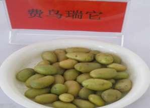 马铃薯微型薯2.jpg