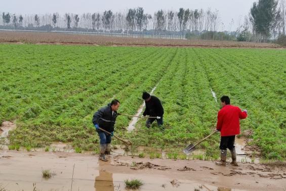 沙巴体育官网开户刘敏会副总经理一行到农场 了解防汛救灾及生产自救情况