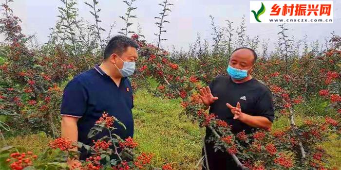 【乡村振兴】通河网上架金桥 沟通花椒产与销