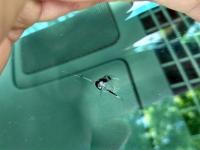 别克林荫大道汽车玻璃修补