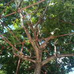 文玩麻核桃大树