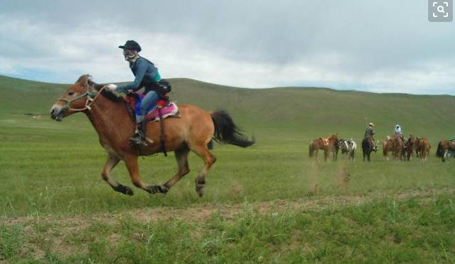 如何防范坝上草原农家院骑马被骗?