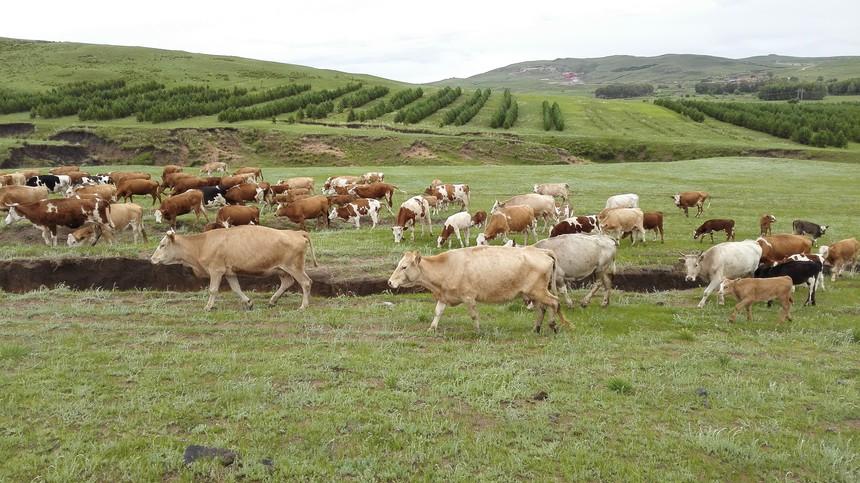 坝上草原农家院骑马