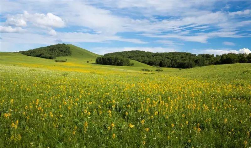 坝上草原景点,丰宁坝上草原景点,坝上草原百花坡