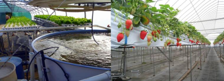 水培及鱼菜共生自动测控系统.png