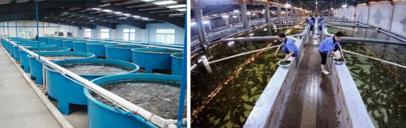 智慧循环水养鱼行业.png