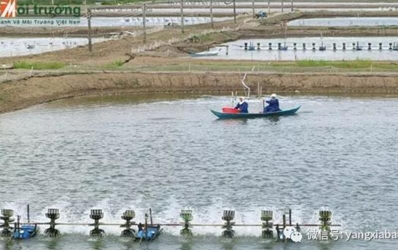 越南养虾1.jpg