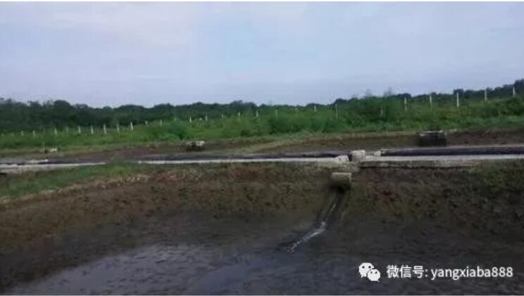 越南养虾3.jpg