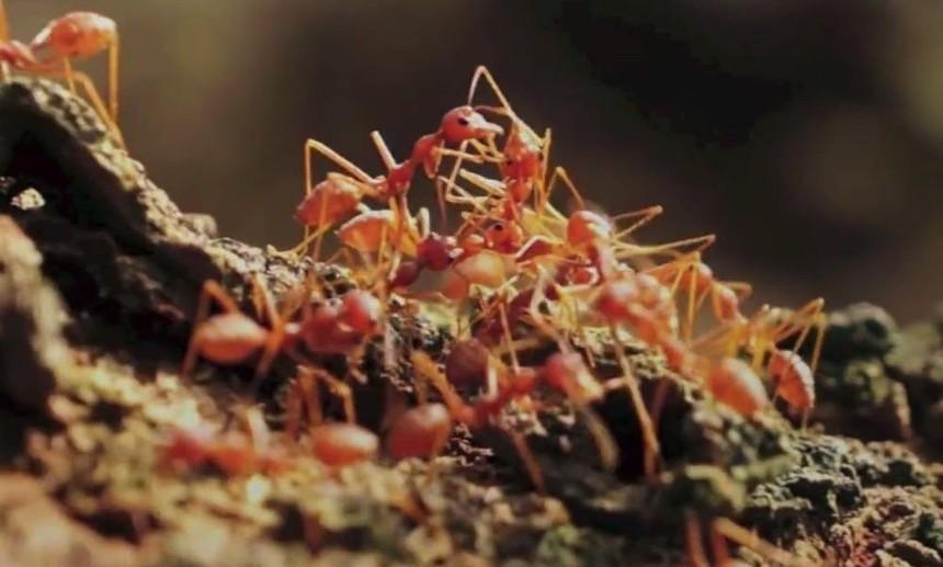 红火蚁怎么防治