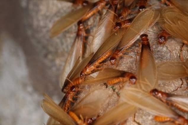 白蚁对哪些东西有危害