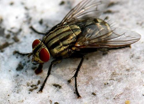 家庭防治苍蝇的小妙招