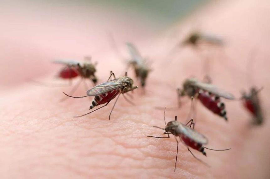 柳州康诺虫控-预防蚊子的好办法