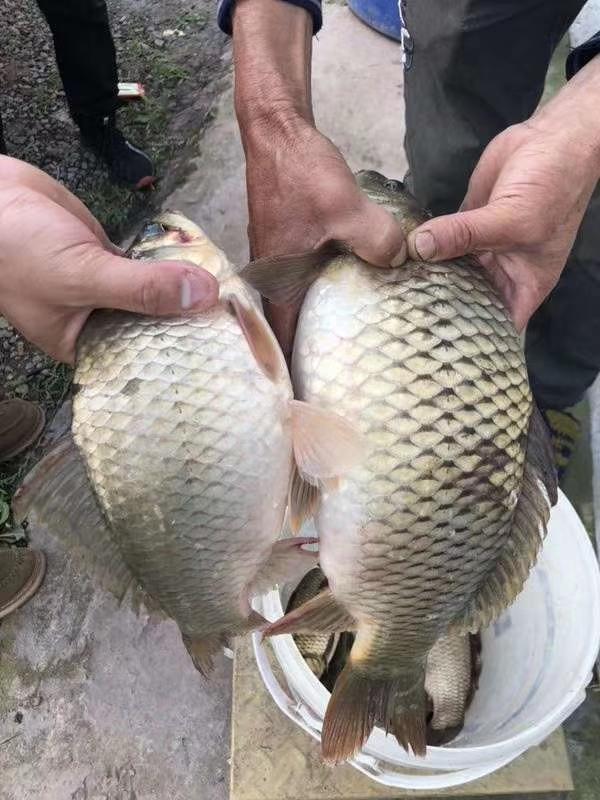 欢迎广大钓鱼爱好者前来垂钓,品种很多,土鲫鱼,黄辣丁,花鲢,